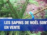 À LA UNE : les sapins de Noël débarquent dans les jardineries / l'Etat investit 3 millions d'€ pour son plan de relance dans la Loire / Les tests antigéniques seront-ils stéphanois / L'ensemble orchestral contemporain de Firminy arrive sur les réseaux soc - Le JT - TL7, Télévision loire 7