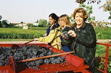 France : Les plus grandes fortunes du vin