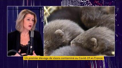 """Visons contaminés au Covid-19 en Eure-et-Loir : """"Pour l'instant, on n'a pas d'humains autour qui sont touchés"""", rassure Barbara Pompili"""
