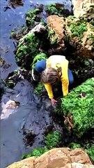 Girl rescues shark caught between rocks in Tasmania