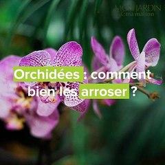 Orchidées : comment bien s'y prendre pour l'arrosage ?