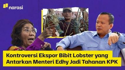 Kontroversi Ekspor Bibit Lobster yang Antarkan Menteri Edhy Jadi Tahanan KPK   Narasi Newsroom