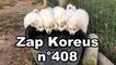 Zap Koreus n° 408