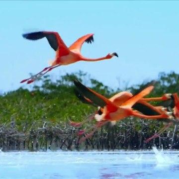 Bahama Blue S01E02  - Mangroves