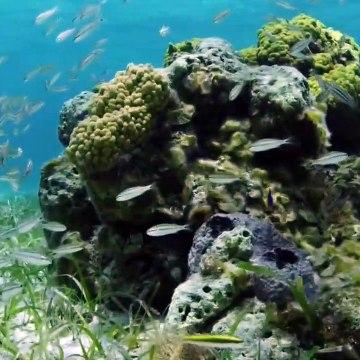 Bahama Blue S01E03  - The Sand Flats