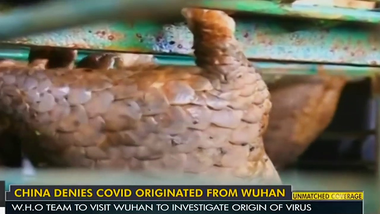 China claims, COVID-19 virus originated outside the country _ Wuhan _ World News