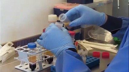 Covid-19 : un plan de vaccination en cinq phases sur le territoire français