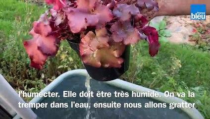 Roland Motte, jardinier : l'automne, la saison idéale pour faire vos plantations