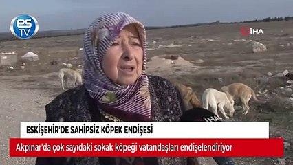 Eskişehir'de sahipsiz köpek endişesi