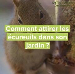 Comment attirer les écureuils dans son jardin ?