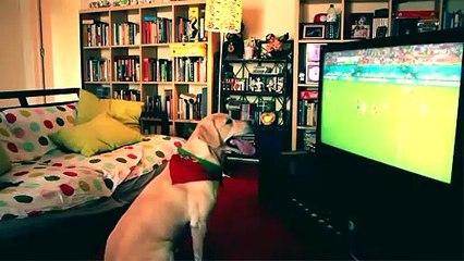 Ce chien encourage l'equipe de football du Portugal