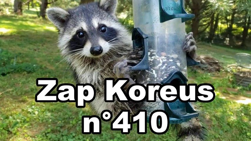 Zap Koreus n°410