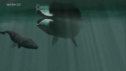 La baleine boréale et son baleineau