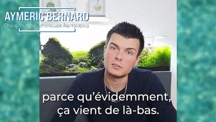 L'aquariophilie en France : Une activité qui se démocratise