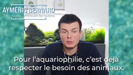 Aquariophilie et aquascaping : Les conseils pour débuter d'Aymeric Bernard