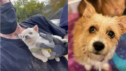 Celebrities like Ellen DeGeneres, Jennifer Aniston and Chriss Tiegan rescued 100 dogs covered in fleas  | Moment 100 dogs covered in fleas and feces are rescued from hoarder's California home