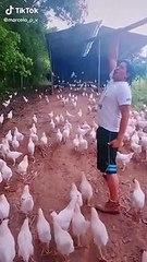 Un homme mène son armée de poulets au combat