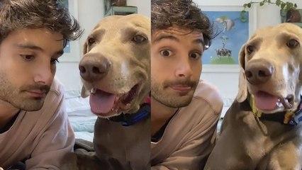 Este hombre habla con su perro y... ¡parece que se entienden!
