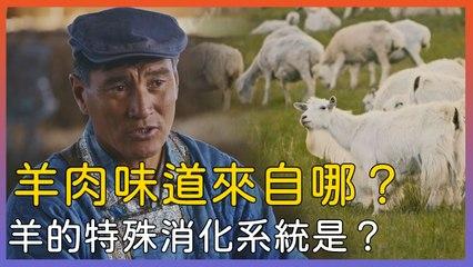 蒙古羊肉味道來自哪裡?羊有什麼特別消化功能可以消化草∣萬物滋養第二季 草原的盛宴∣美食節目∣紀錄片線上看
