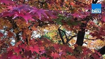 Roland Motte, jardinier : les feuilles mortes, un compost naturel