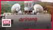Bill introduced aimed at creating legal foundation for Arirang TV