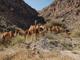 5 mythical beasts that call Arizona home - ABC15 Digital