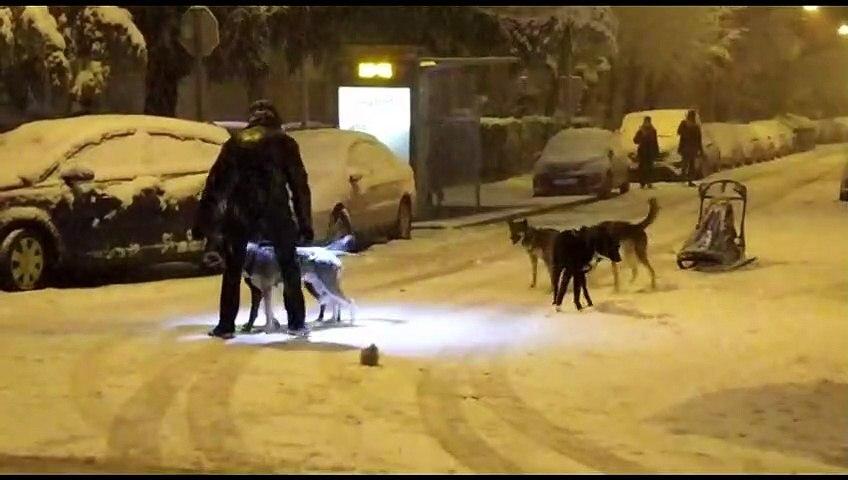 Un deportista sale a practicar mushing con perros de nieve en las calles de Madrid