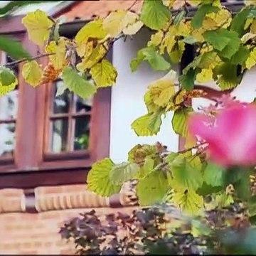 Rote Rosen Folge 254