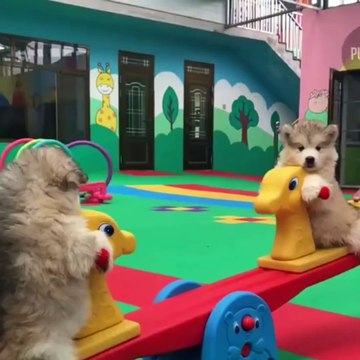 Cute baby animals Videos Compilation cutest moment of the animals  Cutest Puppies
