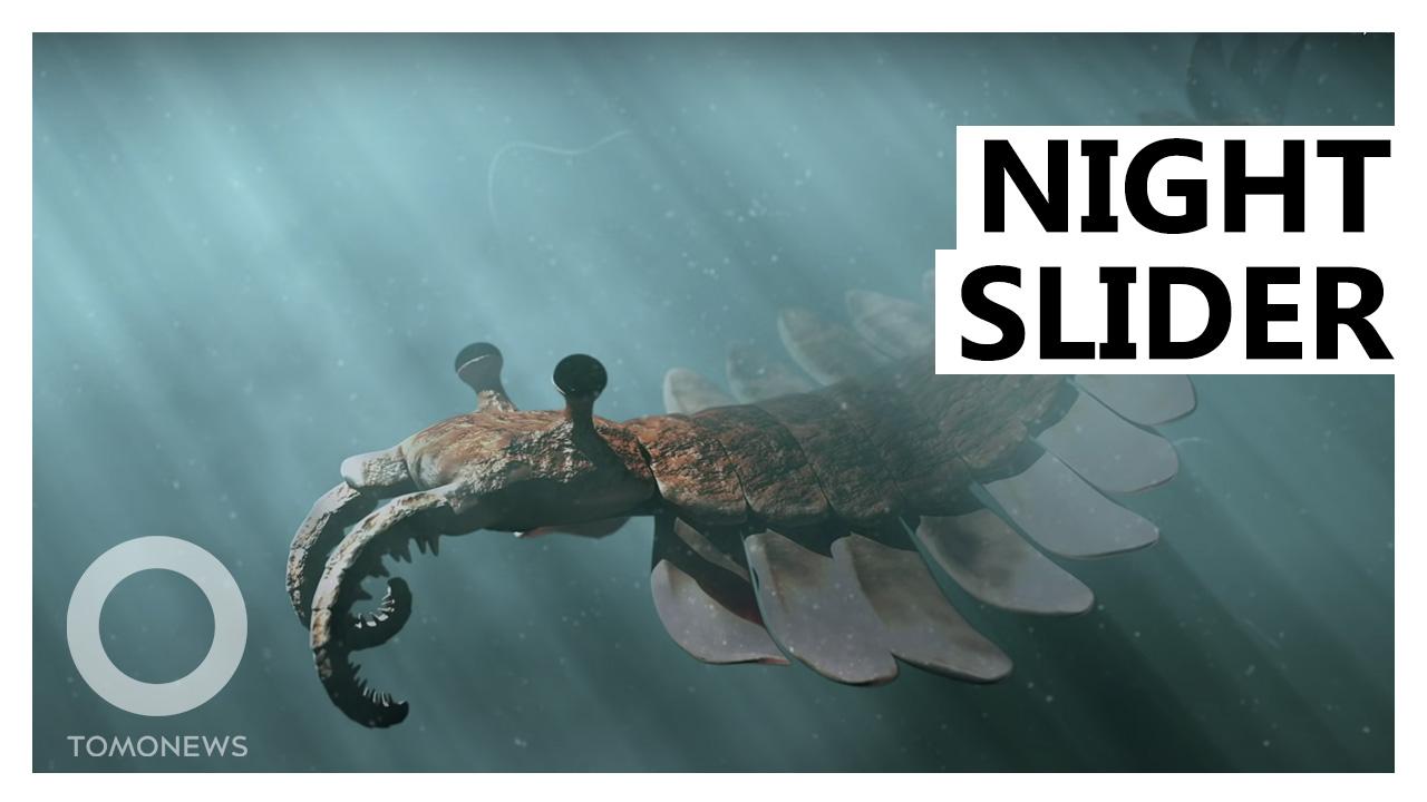 Giant Prehistoric 'Prawns' Developed Night-Vision Eyes