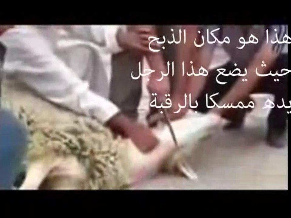أخطاء في ذبح الأضحية تعلم الطريقة الصحيحة للذبح الشيخ العثيمين Video Dailymotion