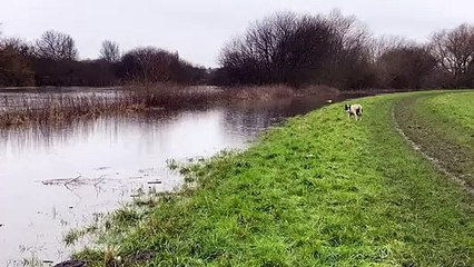 River Calder at Castleford - video by Luke Andrew of Willow Grove Farm