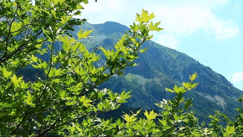 Άγραφα: 3.000 στρέμματα δασικής γης μετατρέπονται ε φωτοβολταϊκό πάρκο