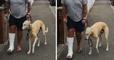 Il emmène son chien qui boite chez le vétérinaire, ce qu'il découvre est absolument incroyable