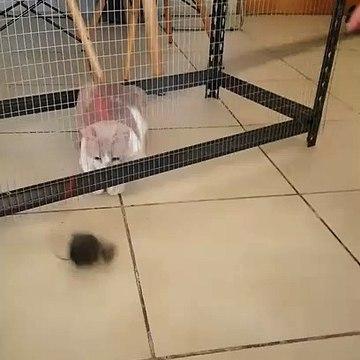 Funny stupid Cat vs Invisible Cage _ Animalians World
