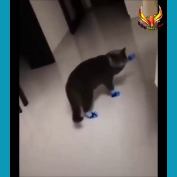 Best Funny cats Video - Enjoy Happy Time #Funny #cats#Funniest #video