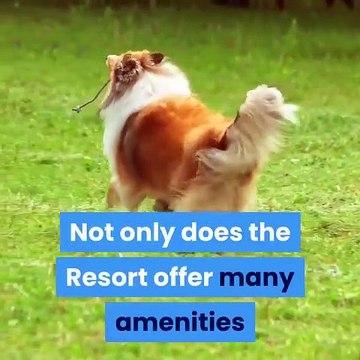 Pet Daycare | Sonoran Desert Pet Resort | 623 551 5299