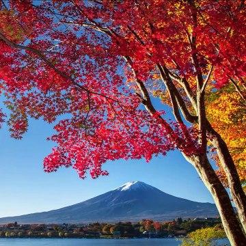 Review HOTEL MYSTAYS Fuji Onsen Resort