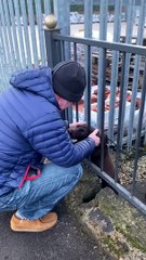 Watch the emotional moment stolen Flora is reunited with owner
