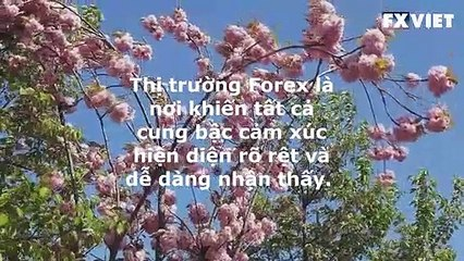 KINH NGHIỆM TRADE FOREX THỰC TẾ | FXVIET