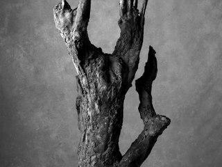 MARINE SERRE - AMOR FATI -Tree