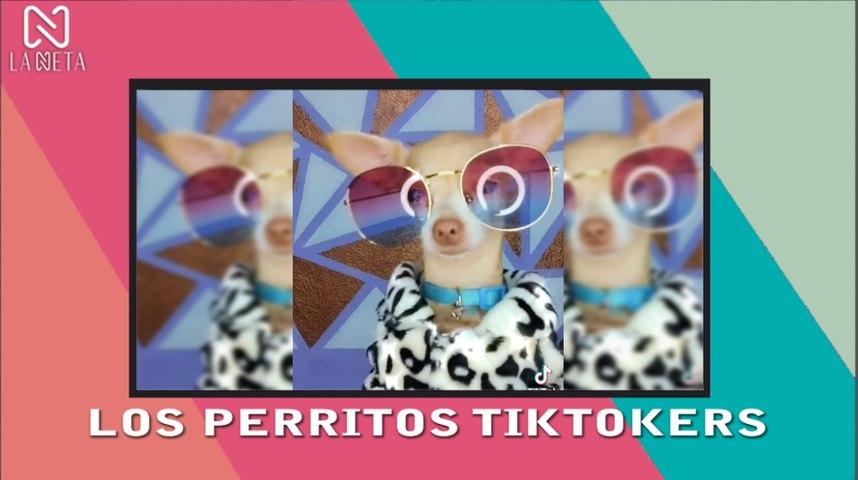 PERRITOS TIKTOKERS