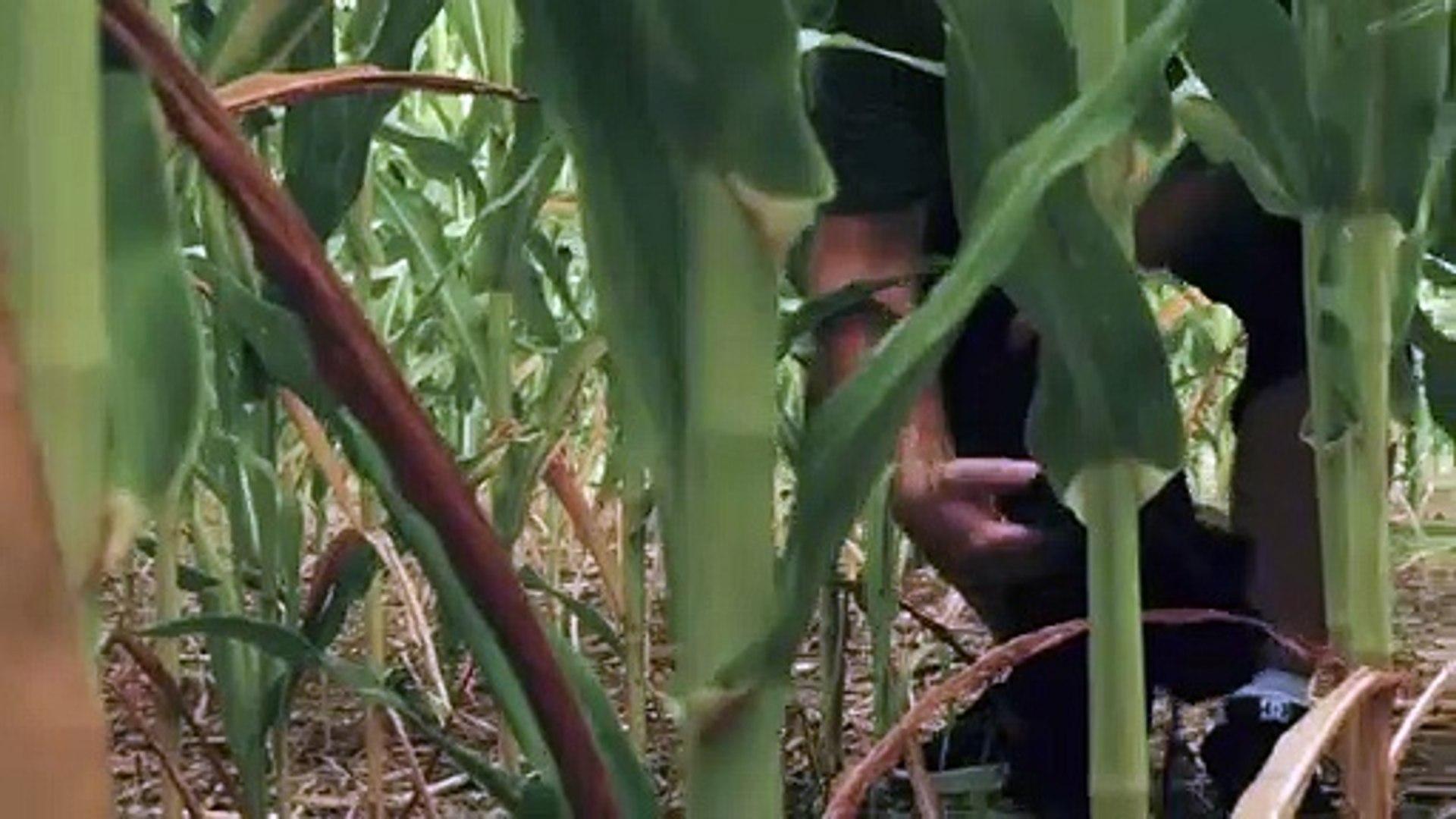 Sharks of the Corn Teaser Trailer - Vídeo Dailymotion