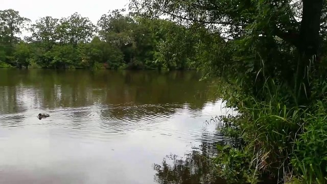 Earlswood Lakes - July 2019