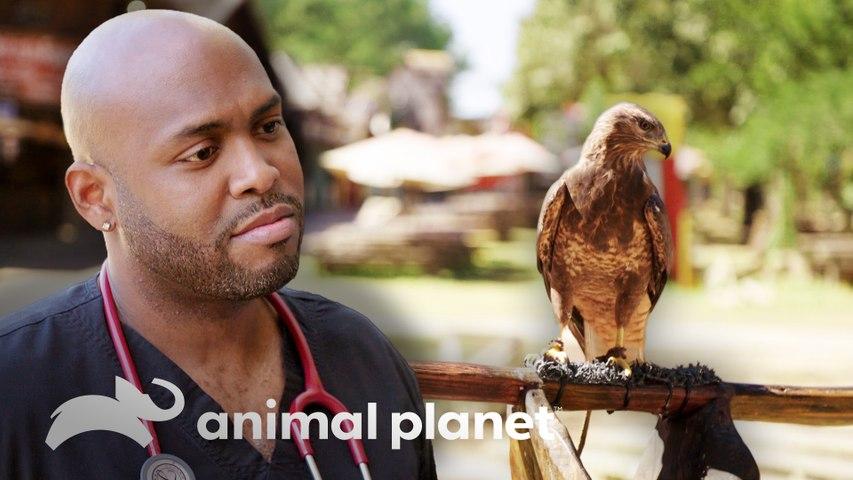 Equipe vacina várias aves silvestres em festival | Veterinários do Texas | Animal Planet Brasil