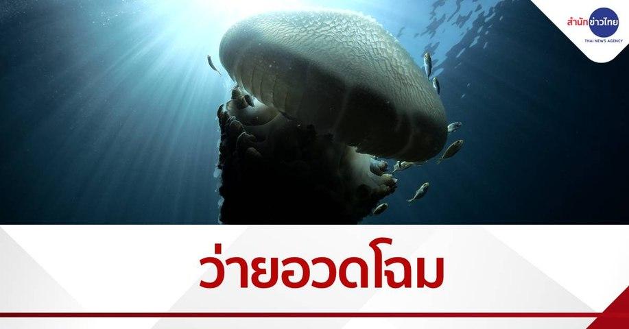 พีพีสวยสงบสมบูรณ์ พบเพิงผาใต้น้ำ แมงกะพรุนยักษ์ว่ายโชว์
