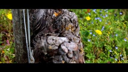 Prévention des TMS en viticulture