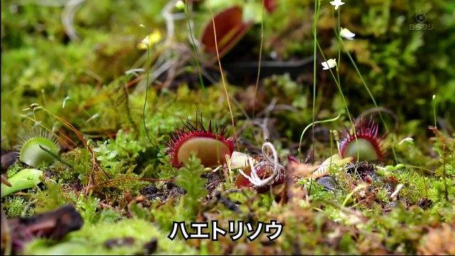 奇奇怪怪!!ミステリアスな植物たち 驚きの生態とメカニズム