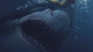 GREAT WHITE (2021- Horror shark Movie