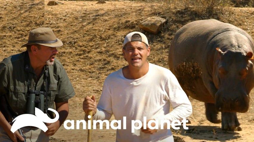 Eles acordam um hipopótamo e avistam rinocerontes   Wild Frank vs Darran   Animal Planet Brasil